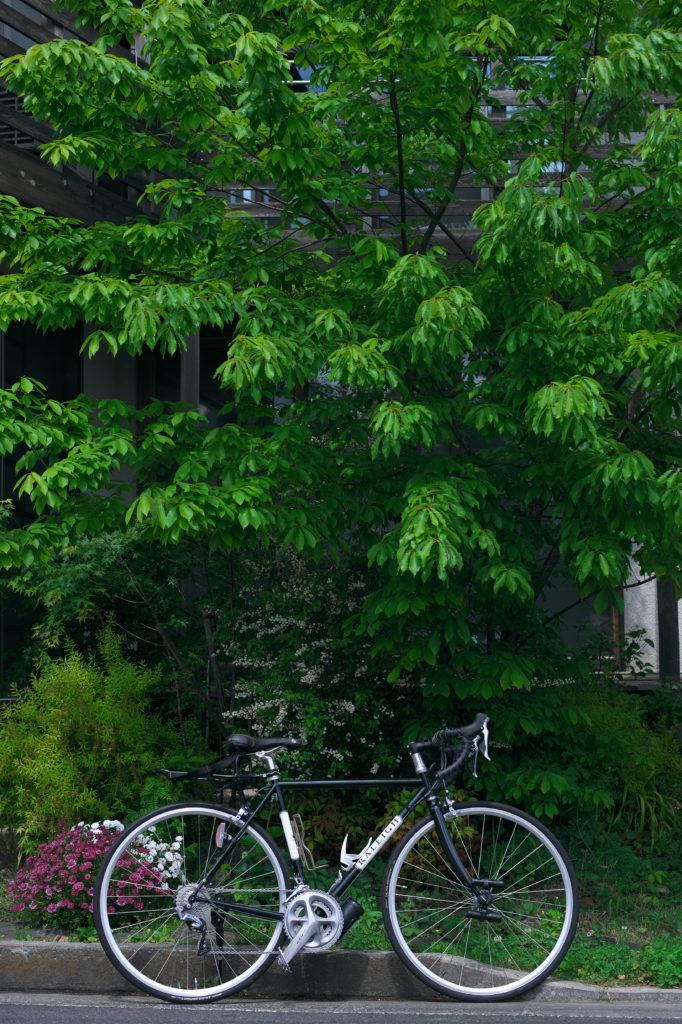 庭のコナラ前のラレーCRF