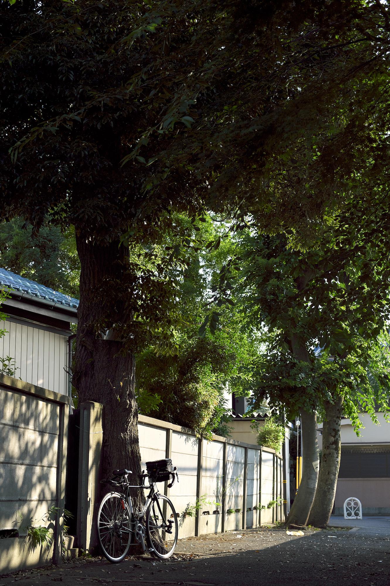 保存樹の下にロードバイクを停めた物臭な私。